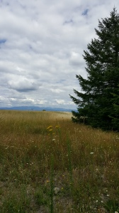 nature walk: Powell Butte